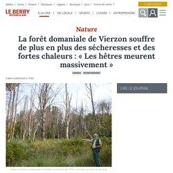LE BERRY 28/09/20 La forêt domaniale de Vierzon souffre de plus en plus des sécheresses et des fortes chaleurs : « Les hêtres meurent massivement »