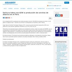 Sechura lidera con 82% la producción de conchas de abanico en el Perú