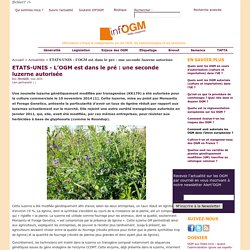ETATS-UNIS - L'OGM est dans le pré : une seconde luzerne autorisée