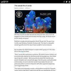 The secret life of corals