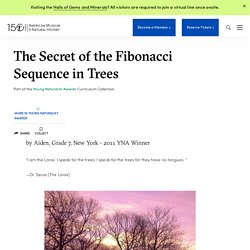 The Secret of the Fibonacci Sequence in Trees