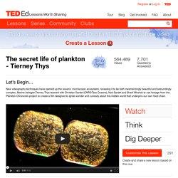 The secret life of plankton - Tierney Thys