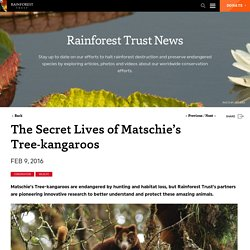 The Secret Lives of Matschie's Tree-kangaroos