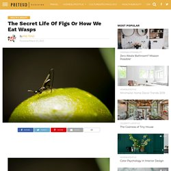 The Secret Life Of Figs Or How We Eat Wasps - PRETEND Magazine