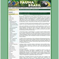 Fauna Brasil-Secretaria libera consumo de ostras, mas mantém res
