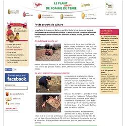Petits secrets de culture - Le plant français de pomme de terre