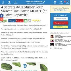 4 Secrets de Jardinier Pour Sauver une Plante MORTE (et la Faire Repartir).