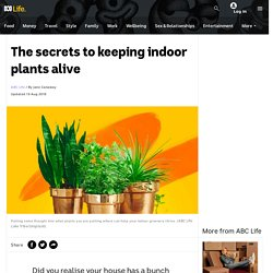 The secrets to keeping indoor plants alive - ABC Life