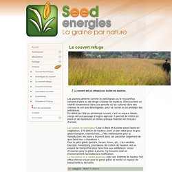 Seedenergies - Le couvert refuge