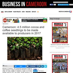 4.5 million cocoa and coffee seedlings to be made available to producers in 2017
