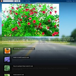 Easy-to-spot/grow flower seeds for sale