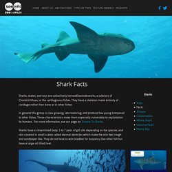 Shark Facts — SEEtheWILD Wildlife Conservation Travel
