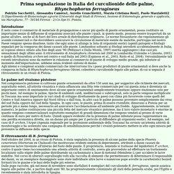 2005 Prima segnalazione in Italia del curculionide delle palme, Rhynchophorus ferrugineus