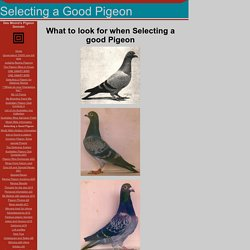 Selecting a Good Pigeon