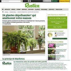 Sélection de 24 plantes dépolluantes pour votre intérieur