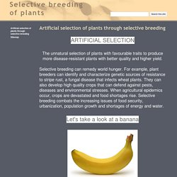 Selective breeding of plants