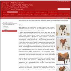 Le Selle: ANAM Cavallo Maremmano