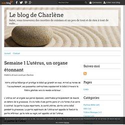 Semaine 1 L'utérus, un organe étonnant - Le blog de Charlène