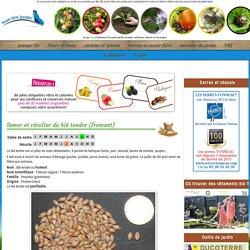 Semer et récolter du blé tendre (froment)