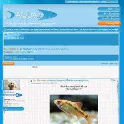 Dès 300 litres Le Barbus Shuberti (Puntius semifasciolatus) : Les Articles des poissons tropicaux