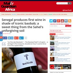Senegal produces first wine in shade of iconic baobab; a sweet thing from the Sahel's unforgiving soil