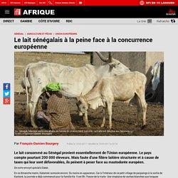 Le lait sénégalais à la peine face à la concurrence européenne