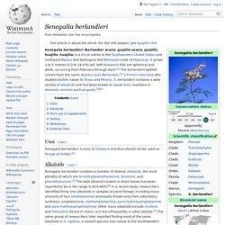 Senegalia berlandieri - Wikipedia