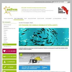 Welfarm.fr - Les poissons, des animaux sensibles et intelligents