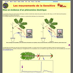 Sensitive : mise en évidence d'un signal électrique