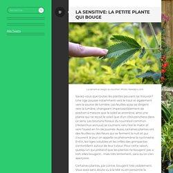 La sensitive: la petite plante qui bouge
