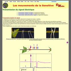 Sensitive : transmission du signal