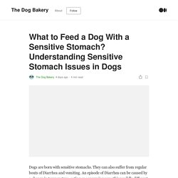 What to Feed a Dog With a Sensitive Stomach? Understanding Sensitive Stomach Issues in Dogs