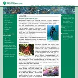 Le réseau « Les sentinelles du récif » - Réserve Naturelle Marine de La Réunion
