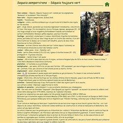 Sequoia sempervirens, Séquoia toujours vert