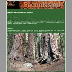 Le séquoia géant (sequoiadendron giganteum) : description générale