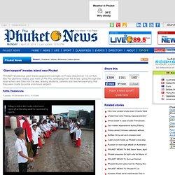 'Giant serpent' invades island near Phuket