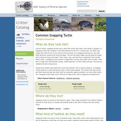 Chelydra serpentina, Common Snapping Turtle: INFORMATION