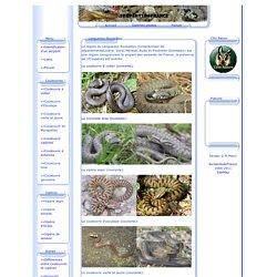 Les serpents présents dans le Languedoc-Roussillon