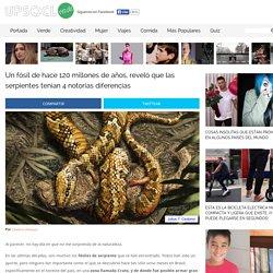 Un fósil de hace 120 millones de años, reveló que las serpientes tenían 4 notorias diferencias