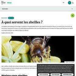 À quoi servent les abeilles ?
