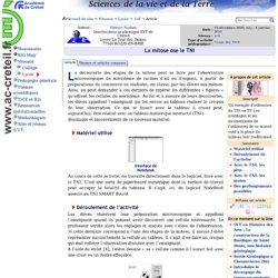 La mitose ose le TNI (Service web S.V.T. de l'Académie de Crétei