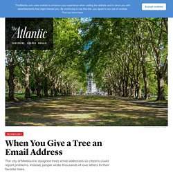 Email-a-Tree Service Doesn't Go As Planned, But in the Best Possible Way