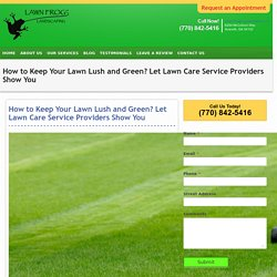 How to Keep Your Lawn Lush and Green? Let Lawn Care Service Providers Show You