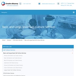 Basic and Large-Scale Cell Culture Services - Creative Bioarray