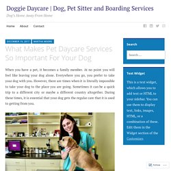 Importance of Pet or Dog Daycare Services