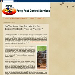 Petty Pest Control Services: Do You Know How Important is the Termite Control Services in Waterloo?