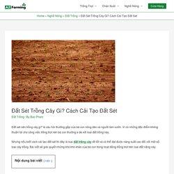 Đất Sét Trồng Cây Gì? Cách Cải Tạo Đất Sét - AZ Farming