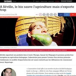 A Séville, le bio sauve l'agriculture mais s'exporte trop