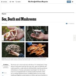Sex, Death and Mushrooms
