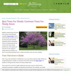 Shade Loving Trees - Learn About Trees That Grow In Shade
